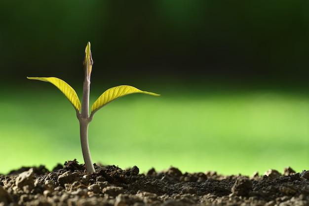 Jonge plant in het ochtendlicht groeit uit de grond