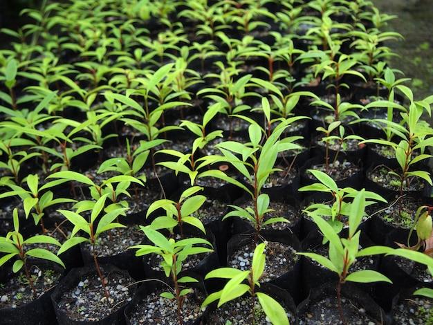 Jonge plant in kindertassen