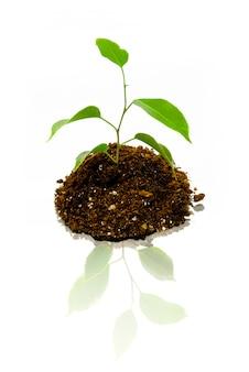 Jonge plant op het wit