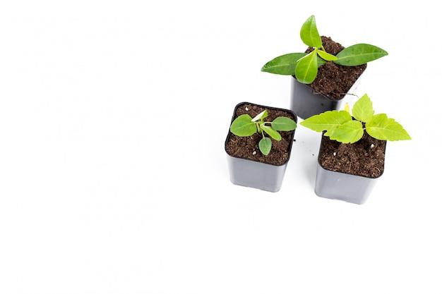 Jonge plant op wit wordt geïsoleerd dat