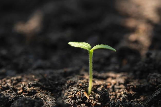 Jonge plant van cannabis in de tuin met zonneschijn