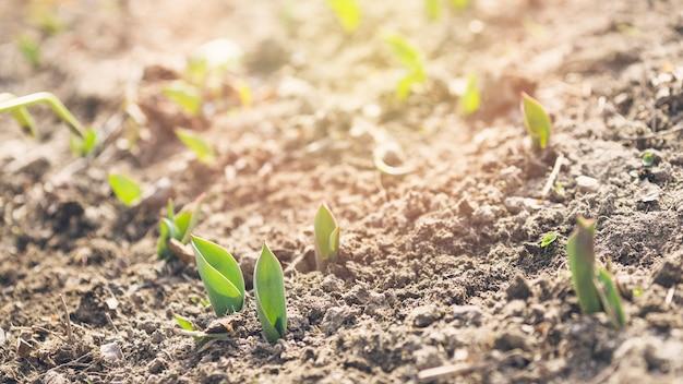 Jonge planten in de bodem