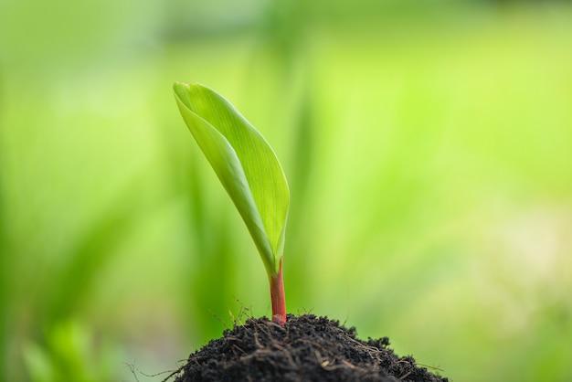 Jonge plantengroei op neutraal groen landbouw nieuwe plant zaailing groeit op de bodem