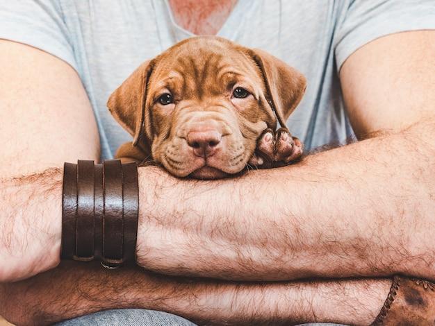 Jonge puppy in handen van de eigenaar