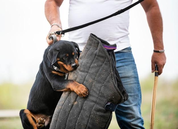 Jonge puppy rottweiler training in de natuur