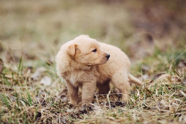 Jonge puppy wacht op meester buiten