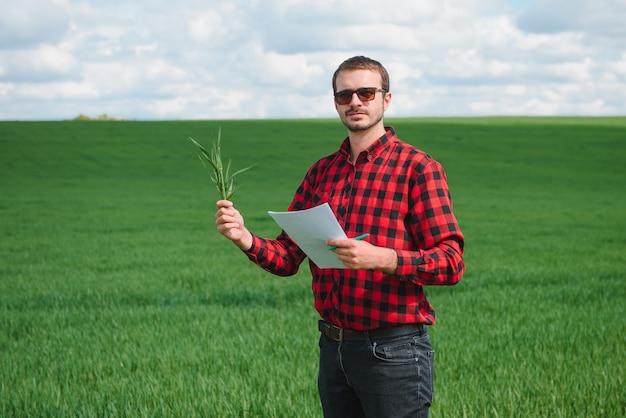 Jonge tarwespruit in de handen van een boer. de boer beschouwt jonge tarwe in het veld. het concept van het agrarische bedrijf