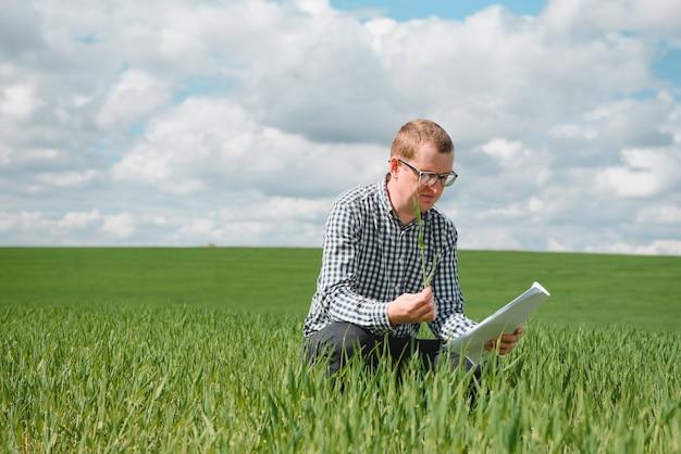 Jonge tarwespruit in de handen van een boer. de boer beschouwt jonge tarwe in het veld