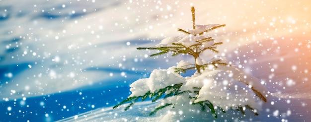 Jonge tedere vuren boom met groene naalden bedekt met diepe sneeuw