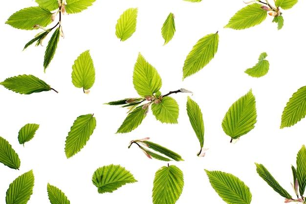 Jonge verse groene bladeren. prachtige lente seizoensgebonden achtergrond.