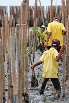 Jonge vrijwilliger plant mangrovebomen bij herbebossing