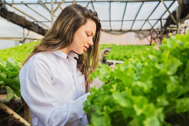 Jonge vrouw die bij de hydrocultuur sla werkt. vrouw in wit pak op hydrocultuur kinderdagverblijf. het verbouwen van biologische groenten en gezondheidsvoeding.