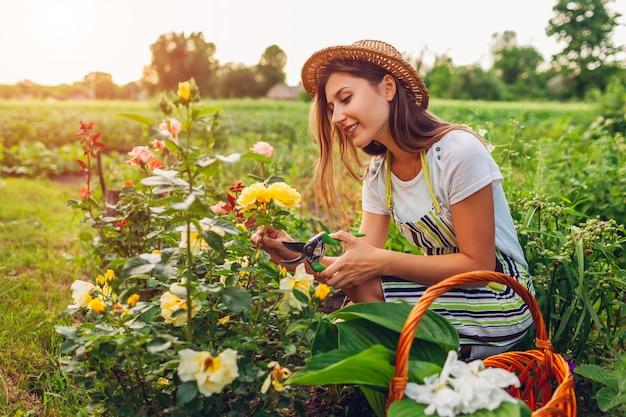 Jonge vrouw die bloemen in tuin verzamelt. tuinman die rozen met snoeischaar afsnijdt. zomer tuinieren werk