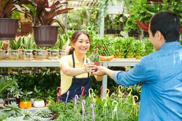 Jonge vrouw die cactus verkoopt