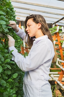 Jonge vrouw die de groei van waterkers in een hydrocultuur tuin controleert en controleert.