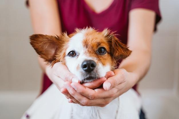 Jonge vrouw die haar leuke kleine hond van hefboomrussell thuis met handdoek droogt