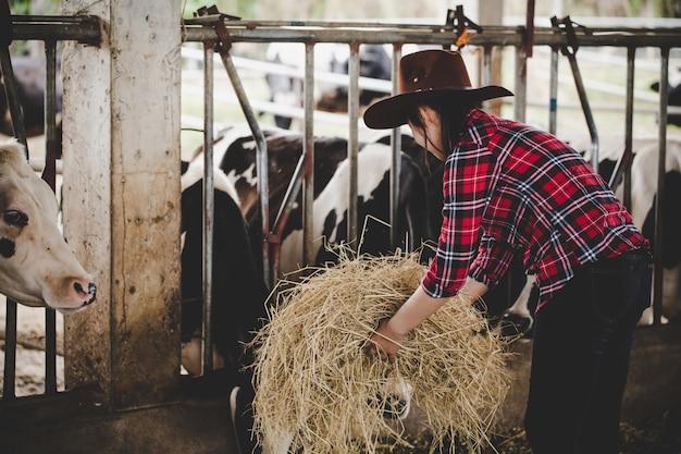 Jonge vrouw die met hooi voor koeien op melkveehouderij werkt