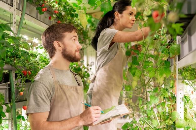 Jonge vrouw die planten onderzoekt terwijl haar assistent informatie over plantengroei in kas vastlegt