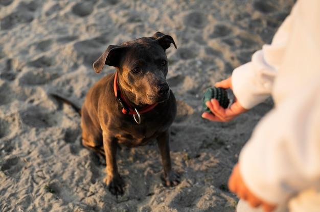 Jonge vrouw geniet van wat tijd met haar hond