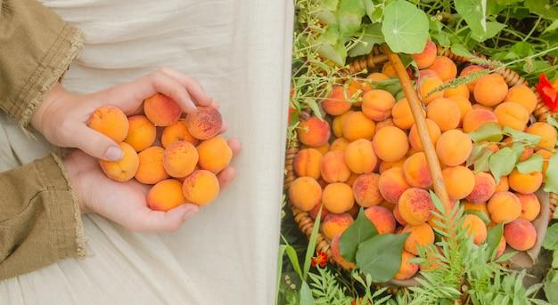 Jonge vrouw het plukken abrikozen