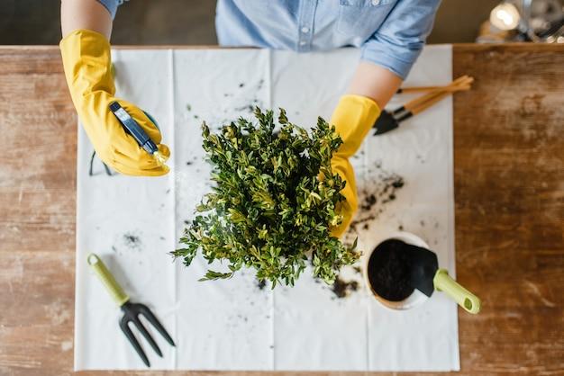 Jonge vrouw in handschoenen spuit huisplanten, bovenaanzicht, bloemist hobby.