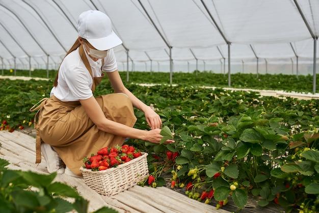 Jonge vrouw in masker aardbeien plukken in kas