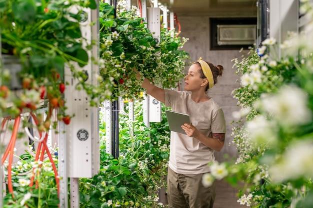 Jonge vrouw in werkkleding die naar bloeiende aardbeienzaailingen kijkt in verticale boerderij