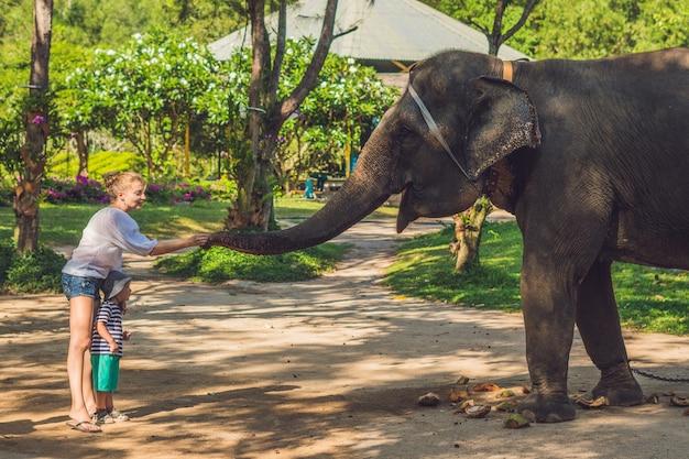Jonge vrouw met kleine jongen olifant voederen in de dierentuin