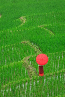 Jonge vrouw met rode paraplu ontspannen in groene rijstterrassen