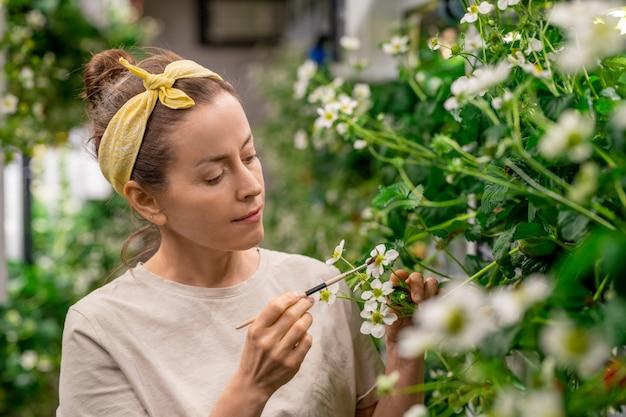 Jonge vrouwelijke agro-ingenieur of boer die aardbeienbloesem bestuift in verticale boerderij