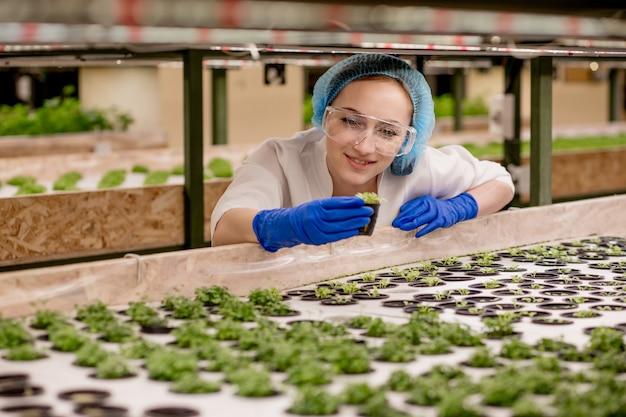 Jonge vrouwelijke boer-wetenschapper analyseert en bestudeert onderzoek naar biologische, hydroponische moestuinen - blanke vrouw observeert over het verbouwen van biologische groenten en gezondheidsvoedsel.