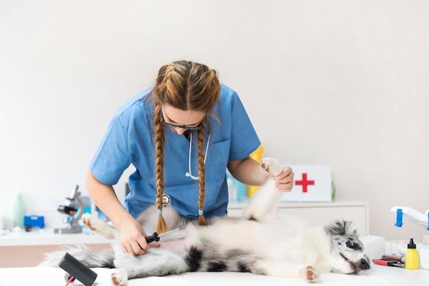 Jonge vrouwelijke dierenarts die hond in kliniek onderzoekt