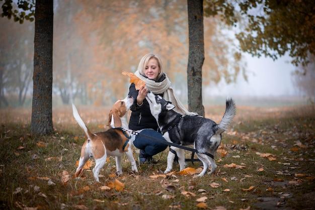 Jonge vrouwelijke huisdiereneigenaar met twee honden die in herfstbladeren spelen