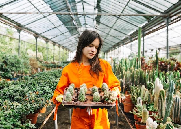 Jonge vrouwelijke tuinman die succulente installaties in serre houden