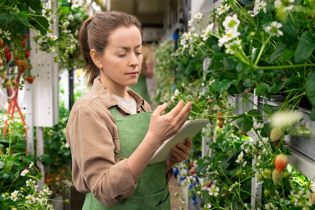 Jonge vrouwelijke werknemer van broeikas of verticale boerderij met behulp van digitale tablet terwijl ze bij de plank met aardbeienzaailingen staat en naar bloesem kijkt