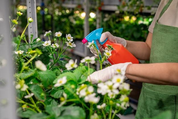 Jonge werknemer in handschoenen en schort die planten water geeft in verticale boerderij
