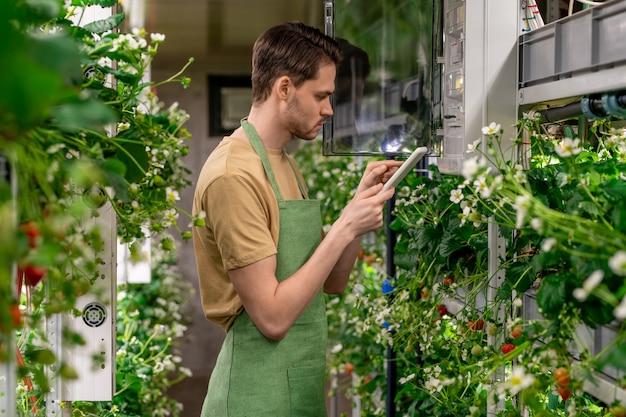 Jonge werknemer van verticale boerderij die tablet gebruikt terwijl hij de temperatuur in de kas controleert en regelt terwijl hij bij het bedieningspaneel staat