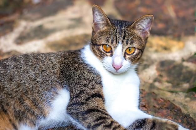 Jonge witbruine kat ligt op een pad op straat, harig favoriet huisdier