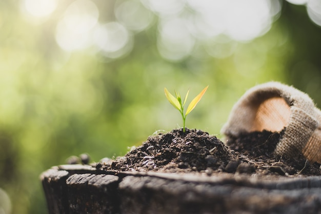 Jonge zaailingen worden gekweekt uit de grond die op oude boomstammen is geplaatst.
