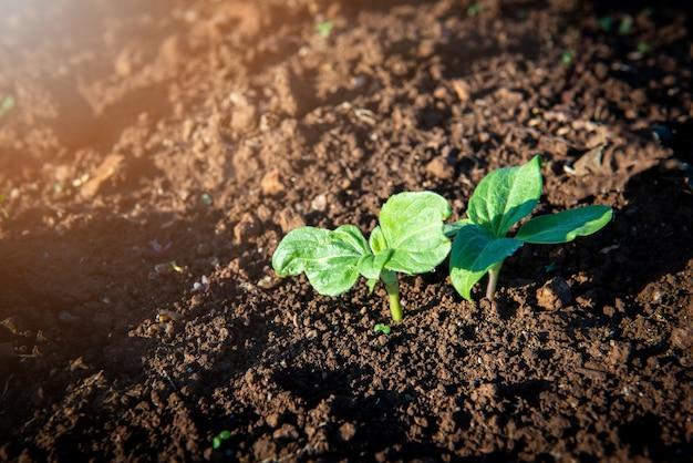 Jonge zonnebloemboom groeit op zonovergoten bodems voor bedrijfsgroei