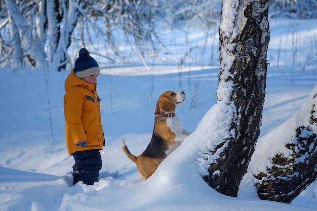 Jongen en beagle hond wandelen en spelen in de winter met sneeuw bedekte bos in een ijzige zonnige dag