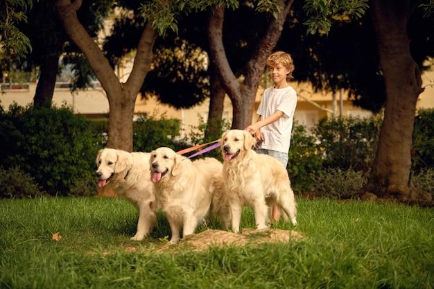Jongen wandelen met roedel honden in park