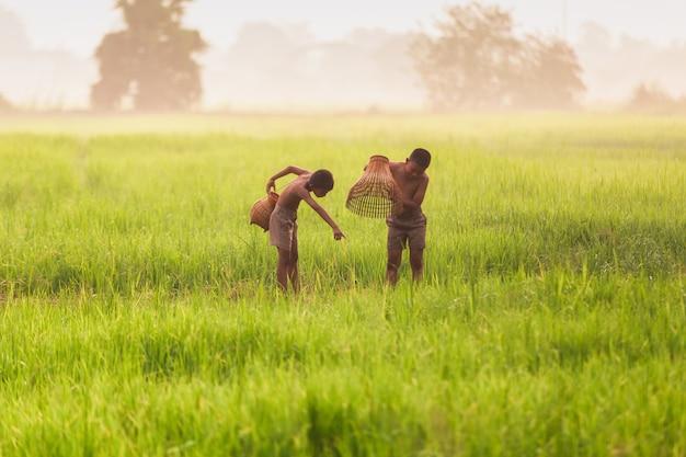 Jongens staan op een rijstveld