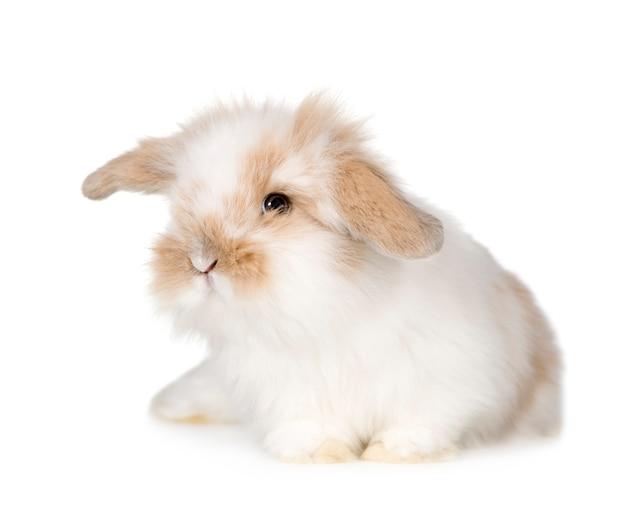 Jongeren close-up op geïsoleerd konijn