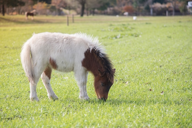 Jongetje schattig paard in een boerderij met groen gras