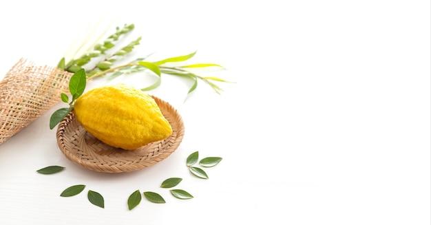 Joodse feestdag van soekot. traditionele symbolen (de vier soorten): etrog (citroen), lulav (palmtak), hadas (mirte), arava (wilg)