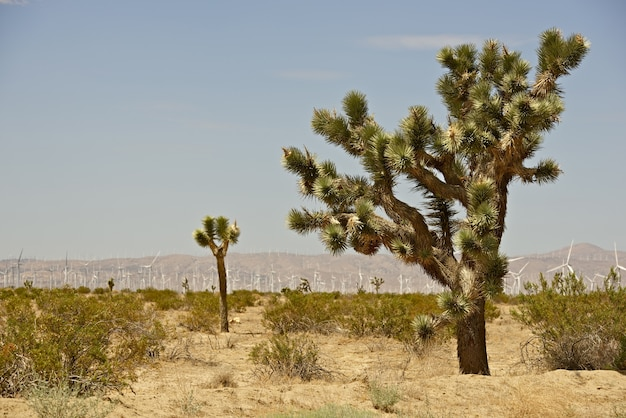 Joshua bomen en turbines