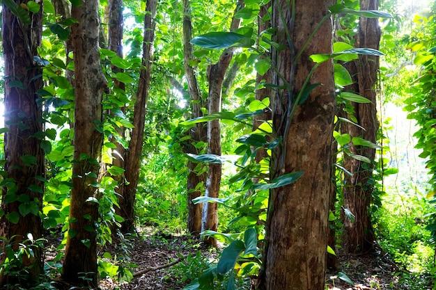 Jungle in hawaï