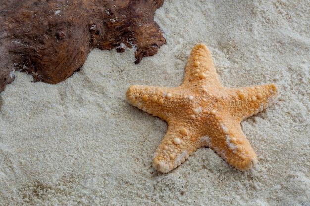 Jungle starfish en wat drijfhout op zacht zand