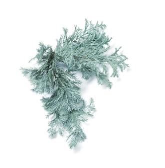 Juniper takken geïsoleerd op een witte achtergrond